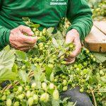 nectar-utrecht-pils-bier-brouwerij-nederland-gulpen-gulpener-biologisch-sfeer03